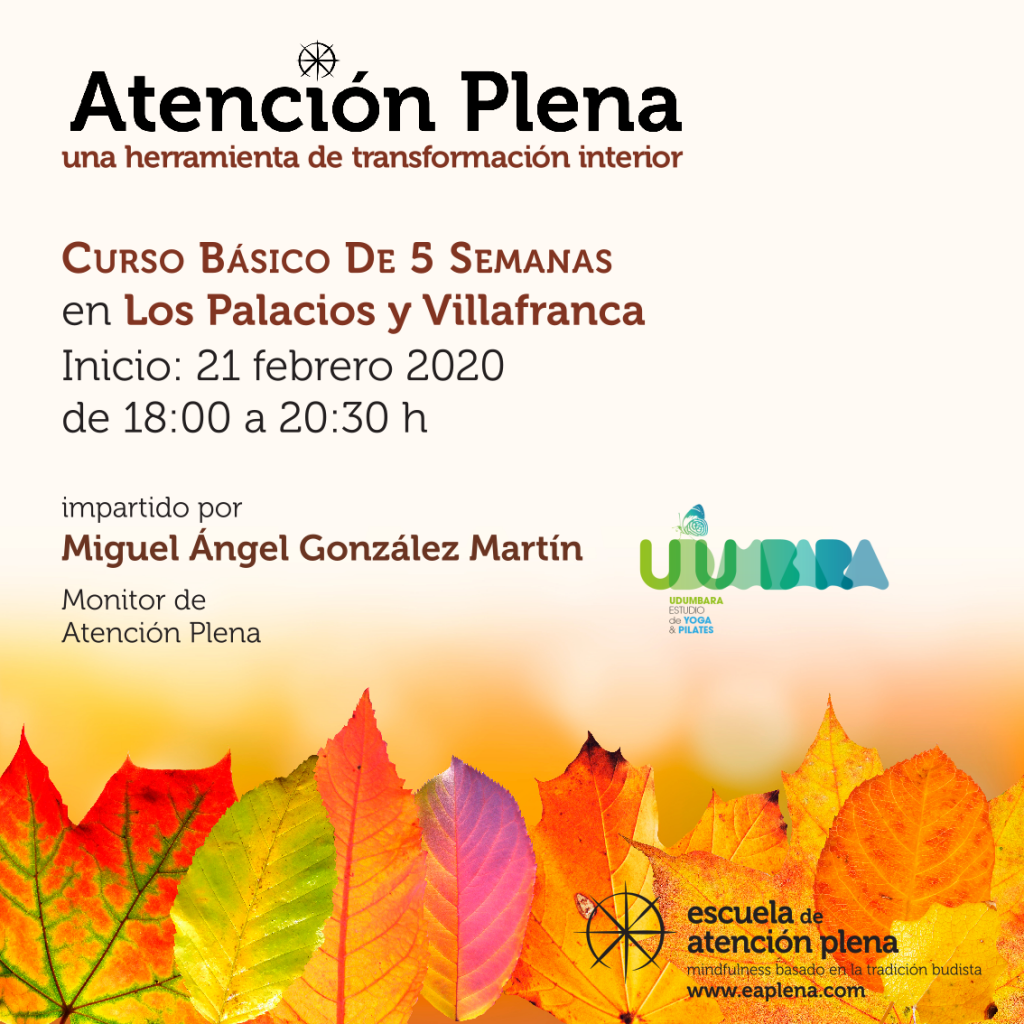 Curso Básico de 5 Semanas en Los Palacios y Villafranca